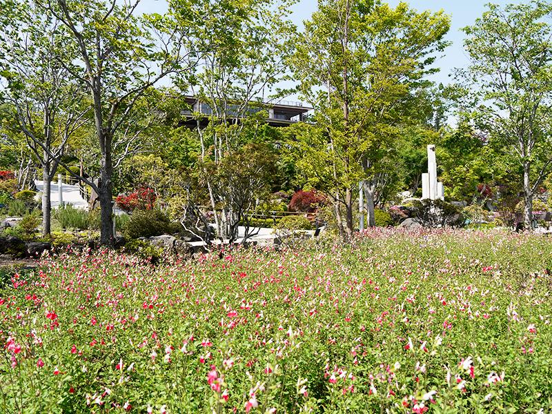 ハーブ庭園 初夏の装い2