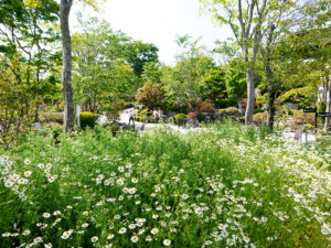 ハーブ庭園 初夏の装い3