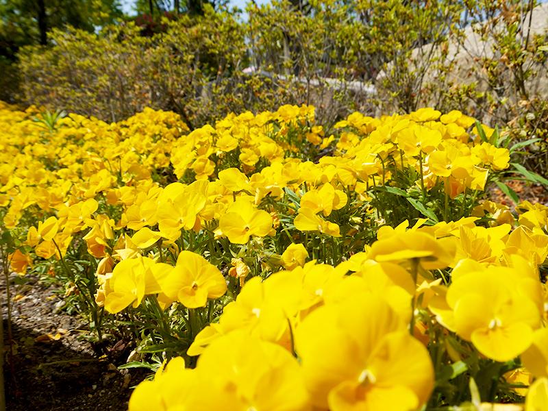ハーブ庭園 初夏の装い7