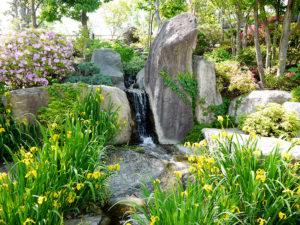 ハーブ庭園 初夏の装い9