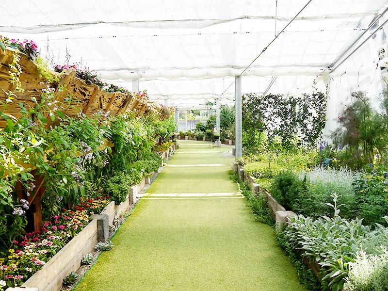 ハーブ庭園 初夏の装い11