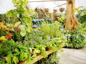 ハーブ庭園 初夏の装い12